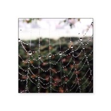 Dew On A Spiderweb Sticker