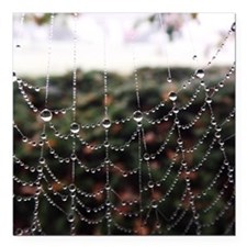 "Dew On A Spiderweb Square Car Magnet 3"" x 3"""