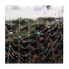 Dew On A Spiderweb Tile Coaster