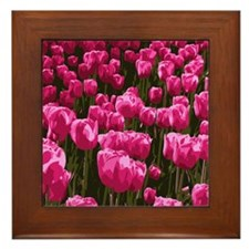 Pretty Pink Tulips Framed Tile