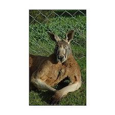 Kangaroo Rectangle Car Magnet