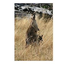 Joey to Mama Kangaroo - I Postcards (Package of 8)