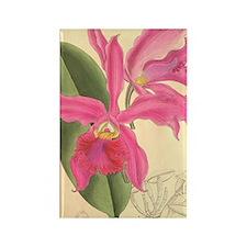 Vintage Orchid Illustration Rectangle Magnet