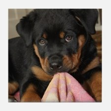 Rottweiller Puppy Tile Coaster
