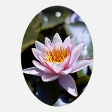 Pink Water Lily Ornament (Oval)