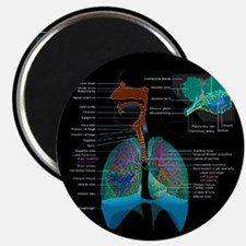 Respiratory system complete dark button Magnets