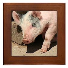 Walking Pig Framed Tile