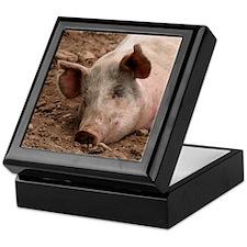 Sleeping Pig Keepsake Box