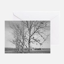 Shoe Tree Cards (Pack of 6)