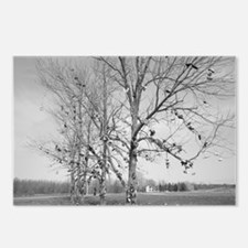 Shoe Tree Postcards (Pack of 8)