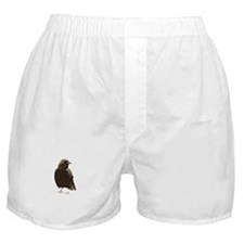 Handsome Crow Boxer Shorts
