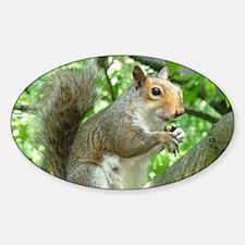Cute Grey Squirrel Photo Design Decal