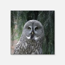 "Owl002 Square Sticker 3"" x 3"""