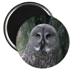Owl002 Magnet