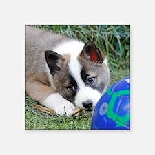 "IcelandicSheepdog013 Square Sticker 3"" x 3"""