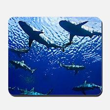 Sharks Underwater Mousepad