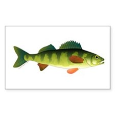 Yellow perch 2 Decal
