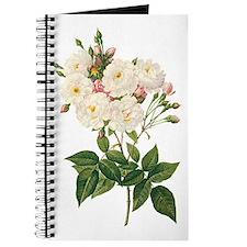 Vintage Blush Noisette Rose Redoute Journal