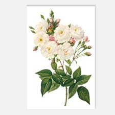 Vintage Blush Noisette Ro Postcards (Package of 8)