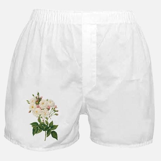 Vintage Blush Noisette Rose Redoute Boxer Shorts