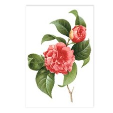 Vintage Flowers Camellias Postcards (Package of 8)