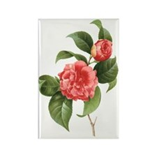 Vintage Flowers Camellias by Redo Rectangle Magnet
