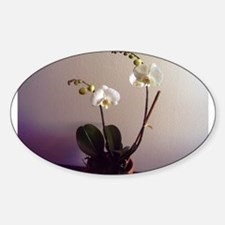 Moth Orchid Oval Decal
