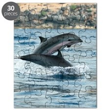 Fraser's dolphins Puzzle