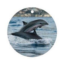 Fraser's dolphins Round Ornament