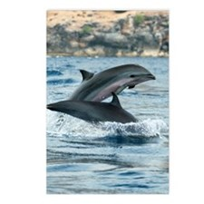 Fraser's dolphins Postcards (Package of 8)