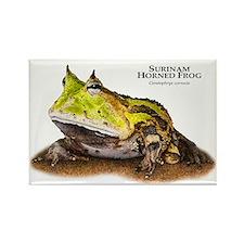Surinam Horned Frog Rectangle Magnet