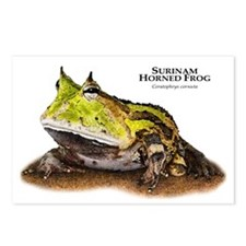 Surinam Horned Frog Postcards (Package of 8)