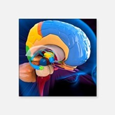 "Human brain anatomy, artwor Square Sticker 3"" x 3"""