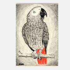 African Grey in Pencil Postcards (Package of 8)
