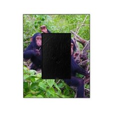 Two Chimps Playing Picture Frame