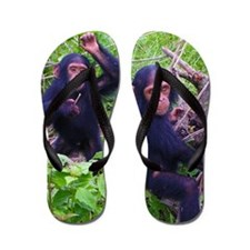 Two Chimps Playing Flip Flops