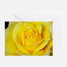 Beautiful single yellow rose Greeting Card