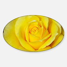 Beautiful single yellow rose Decal