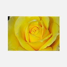 Beautiful single yellow rose Rectangle Magnet