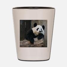 Panda-MP Shot Glass