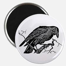 Vintage Raven in Tree Illustration Magnet
