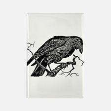 Vintage Raven in Tree Illustration Rectangle Magne
