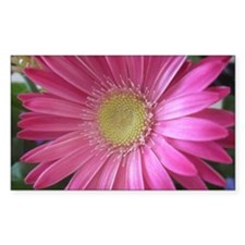 Pink Daisy Decal