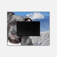 Blue American Pit Bull Terrier Puppy Picture Frame