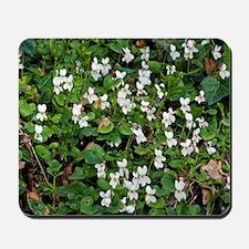Sweet Violet (Viola odorata) Mousepad
