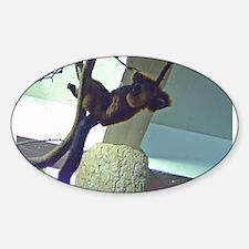 ruffed lemur Oval Decal