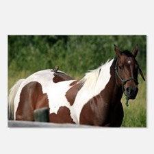 Horse with bird Postcards (Package of 8)