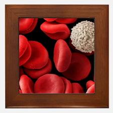Red and white blood cells, SEM Framed Tile