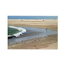 Beach Birds Rectangle Magnet