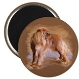 King charles cavalier Magnets